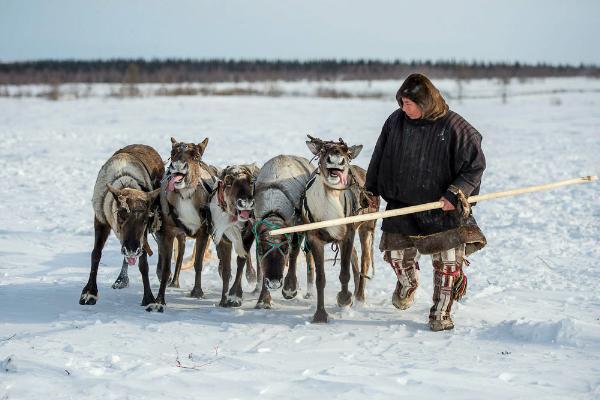 На Ямале осенью откроют посвященный культуре кочевников турмаршрут