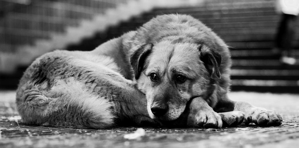 В Крыму массово потравили собак