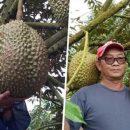 В Таиланде продан дуриан за 170 тысяч рублей