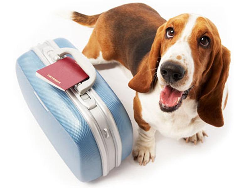 Правила перевозки домашних животных