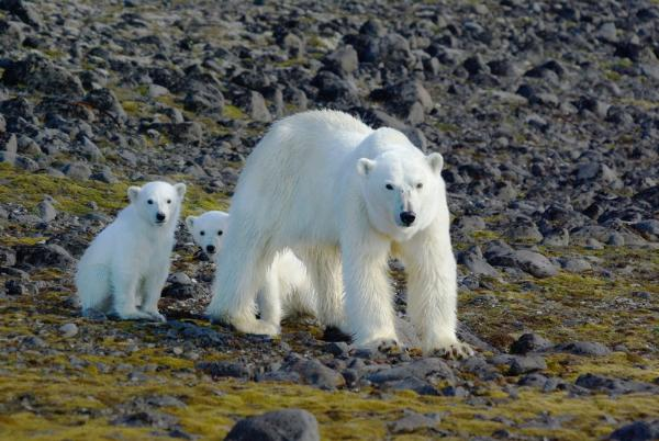 Более тысячи туристов посетили нацпарк «Русская Арктика» этим летом