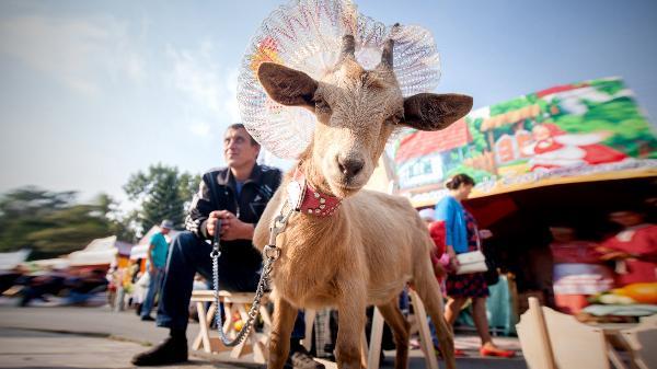Туристы из Мексики прибыли в Урюпинск на празднование 400-летия города