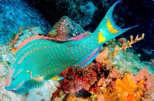 В районе Баваро появится коралловый «сад»