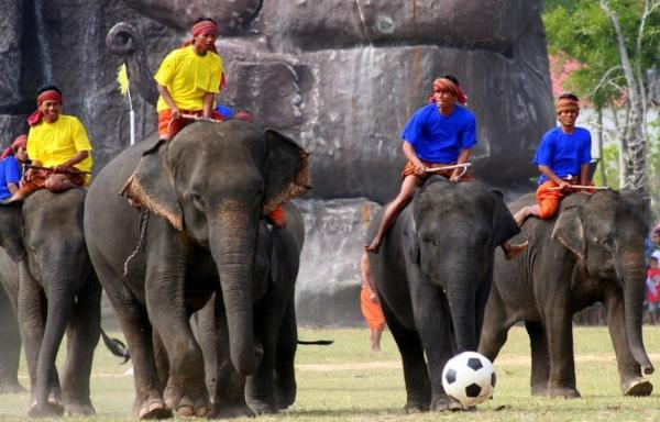 В Сурине туристы увидят футбольный матч с участием слонов