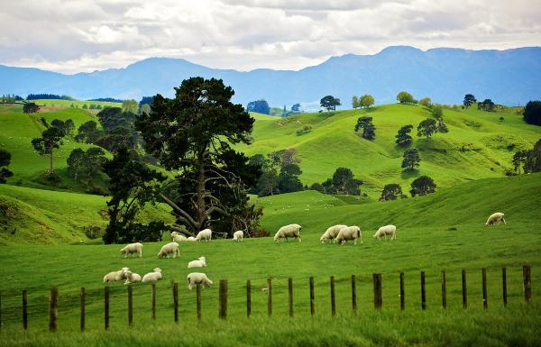 Новая Зеландия планирует заработать на туристическом налоге в 2019 году $80 млн