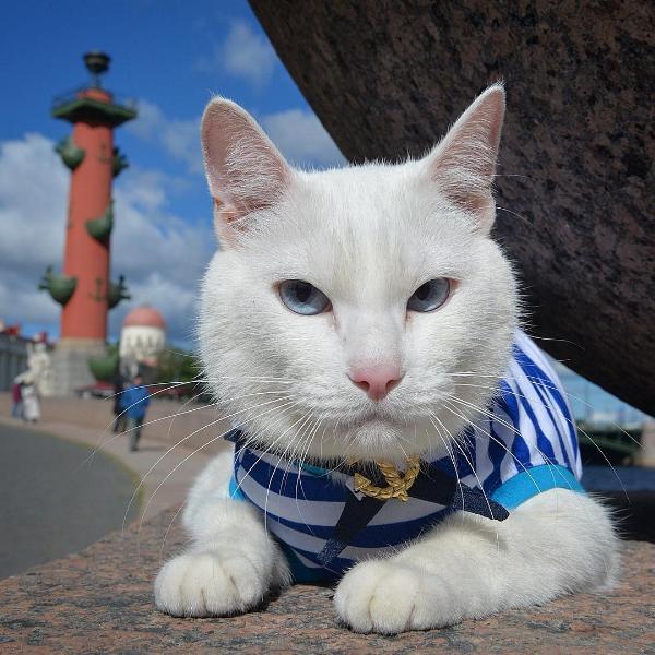 Эрмитажного кота Ахилла наградили за популяризацию туризма в Ленинградской области
