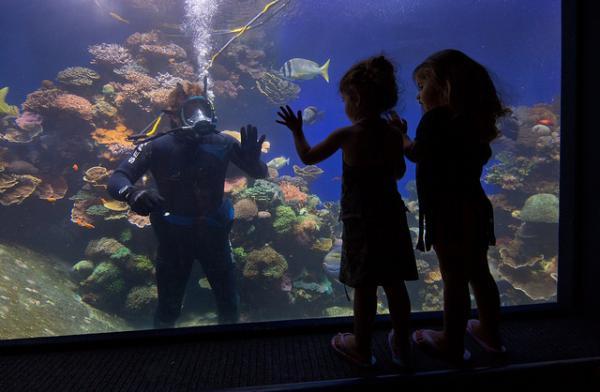 Отели Эйлата предлагают бесплатное размещение для детей