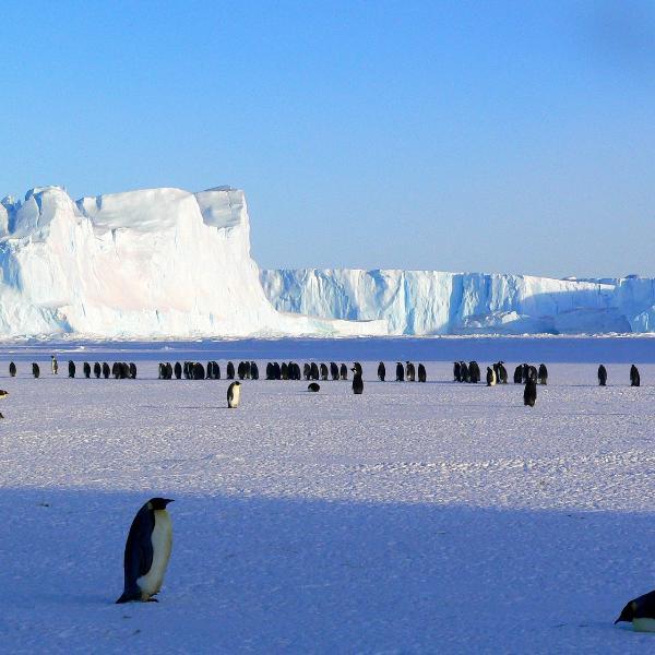 Американец впервые в одиночку пересек пешком Антарктиду