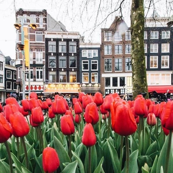 В Амстердаме открыли сезон тюльпанов