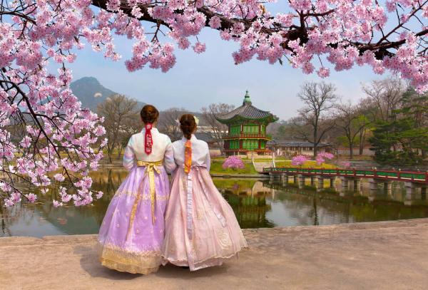 Альтернативная сакура: россиянам предлагают весенние туры в Южную Корею